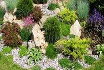zahrada / kyti