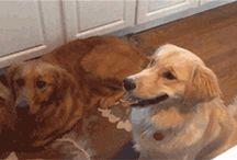 Doggies~