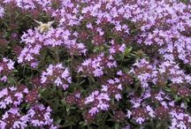 Floral Lawn