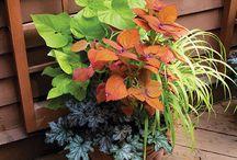 Viveiro JN / Paisagismo, plantas e produtos para jardinagem