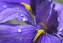 Flowers by Vision4reality / Flowers & Plants photography