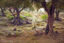 Sacred Land of  Krishna