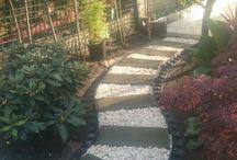 moje piny ogród