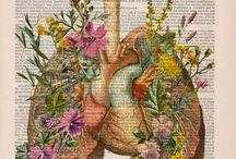 Anatomia art