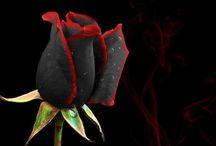 Roses in black