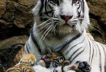 Animals I Love / animals / by Nicole Boronka