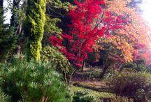 Bahçıvanlık Kursu 2014 Güz Dönemi / Ağaç A.Ş Ağaç ve Peyzaj