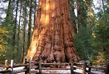 Sequoia and Kings Canyon National Parks / by Patricia H