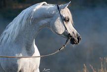 Horses / by Kellee Clower