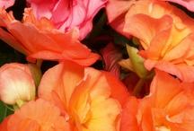 Bloom Magazine / Al's Garden Center quarterly magazine of garden ideas and inspiration