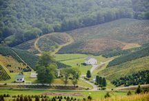 Our Christmas Tree Farm / Photos of our Christmas tree farms in the Blue Ridge mountains of North Carolina and Virginia.