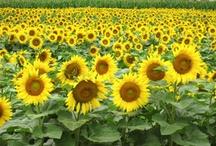 Spectacular Summer / by Duke Farms