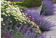 Garden Palette: Purple / Purple can add a wonderfully calming feel to the garden. Add a splash of colour to fences, benches etc with it too.