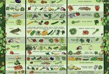 Zahradkarstvo