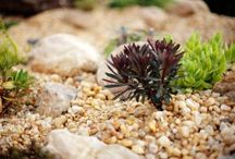 Rock Gardens / A collection of photos from Cartwright Landscaping's projects.