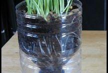 φυτά-plants
