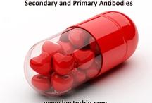 Secondary Antibodies