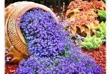 Kukka ja puutarhaideat