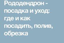 РОДОДЕНДРОНН