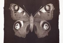 Henrietta Molinaro Van Dyke Prints