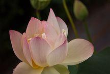 Exotic beautiful flowers