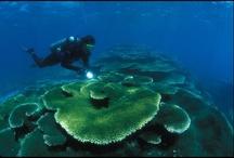 Marine Protected Area / Reserves / Sanctuaries
