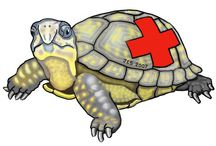 NC State Turtle Rescue Team / Turtle Rescue Team is a non-profit organization run by veterinary students at NC State University's College of Veterinary Medicine.  They provide medical, surgical and husbandry services free of charge in the hope of releasing rehabilitated turtles back into the wild.  Currently, Turtle Rescue Team sees and treats between 200 to 300 wild turtles, reptiles and amphibians. http://ncturtlerescueteam.org