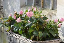 DAVANZALI / giardinaggio