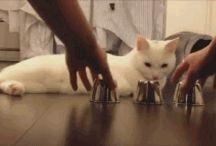 Schlaue Katze!!