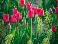 Spring / by Sandy Krupa