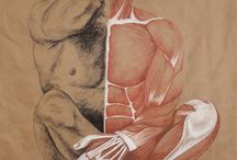 Muscle Studies / Art work created by Marcy Ann Villafana - Villafana Art   Part of her Just muscle and bones collection  - Original drawings with muscle