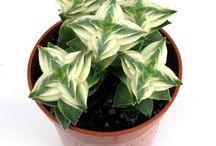 Plants + Plant Care / by Joanne Hotchkiss