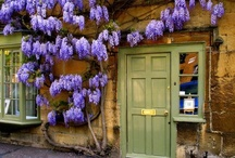 """""""For those who love wisteria and sunshine...""""  / from Enchanted April, by Elizabeth Von Arnim / by Carlyn White"""