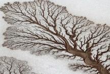 Nature / by Sylvie Demarcq