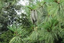 Poss plant identifications / Gardening