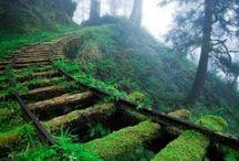 I Love Moss / Moss