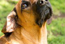 Pet photo ideas / Ideas for pet photos
