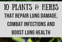 HERBS & PLANTS TO HEAL DAMAGED LUNGS