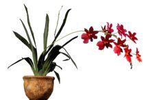 Png - virágok / Háttér nélkül,