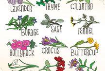 Sa plantam aceste flori