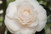 Flowers  / by Maryouma Tig