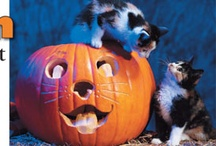 Cute Halloween Stuff / by Halloween News