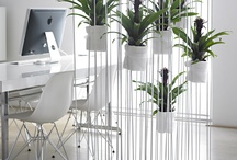 Plants deco