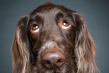 Dog / Beautiful dog