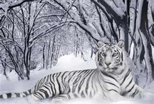 winter  / by Marie Ellis