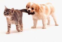 házi állatok