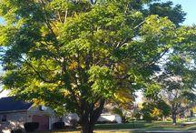 Träd utökad