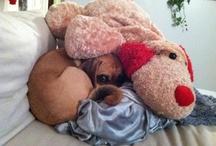 puppy / by Stephanie Manter