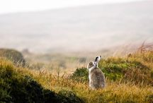 Mammals / Mammals seen when our and about on the moors and beyond!