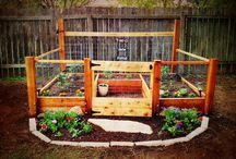 Veggie garden tips